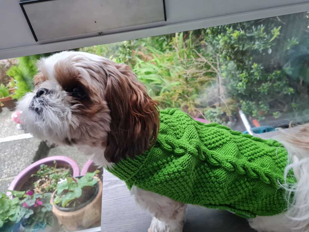 Hand Knitted Dog Jackets