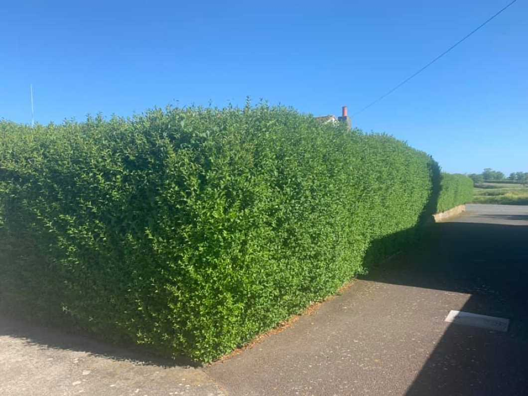 ROADSIDE HEDGE CUTTING 1ST - 15TH JUNE